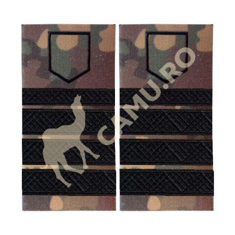 Grade Subofiteri Armata PLUTONIER ADJUTANT PRINCIPAL Instructie – Selecteaza Arma